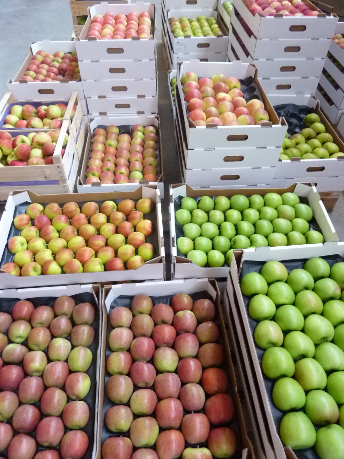 Gelegte Äpfel 1