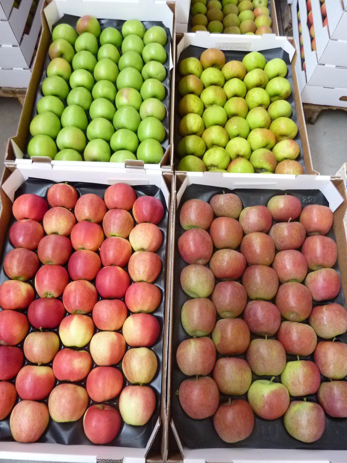 Gelegte Äpfel 3